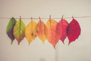 色づいた落ち葉