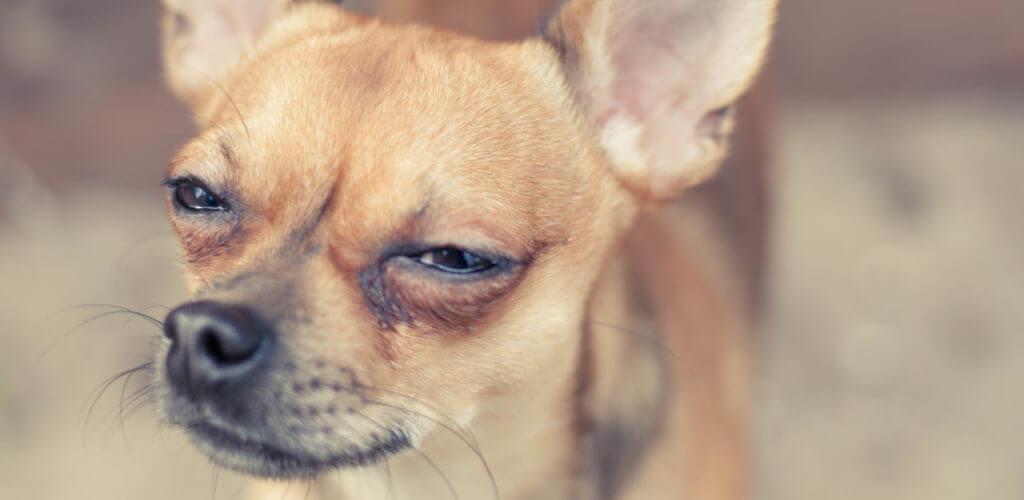 怪訝そうな顔の犬